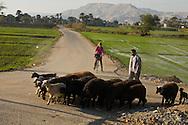 Egypt. Louxor - tourist woman on a bicycle ,countryside , Thebes side  Louxor - Egypte   / touriste femme sur une bicyclette,  la campagne sur la rive thebaine  Louqsor - Egypt