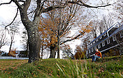 Sitting on the leaf littered lawn, student Aibhlin Moye-Linehan studies the tree she 'adopted' at the beginning of the school year