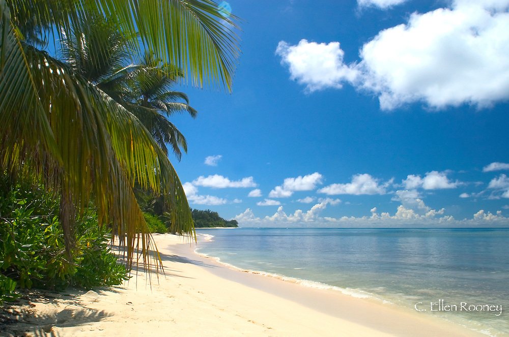 Palm trees over a  white sand beach on Des Roches island in The Seychelles, The Indian Ocean