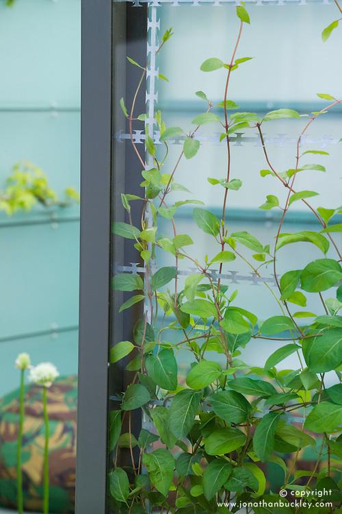 Glass panel divider. Peace is Special garden. Design: Jennifer Hirsch - Chelsea 2005