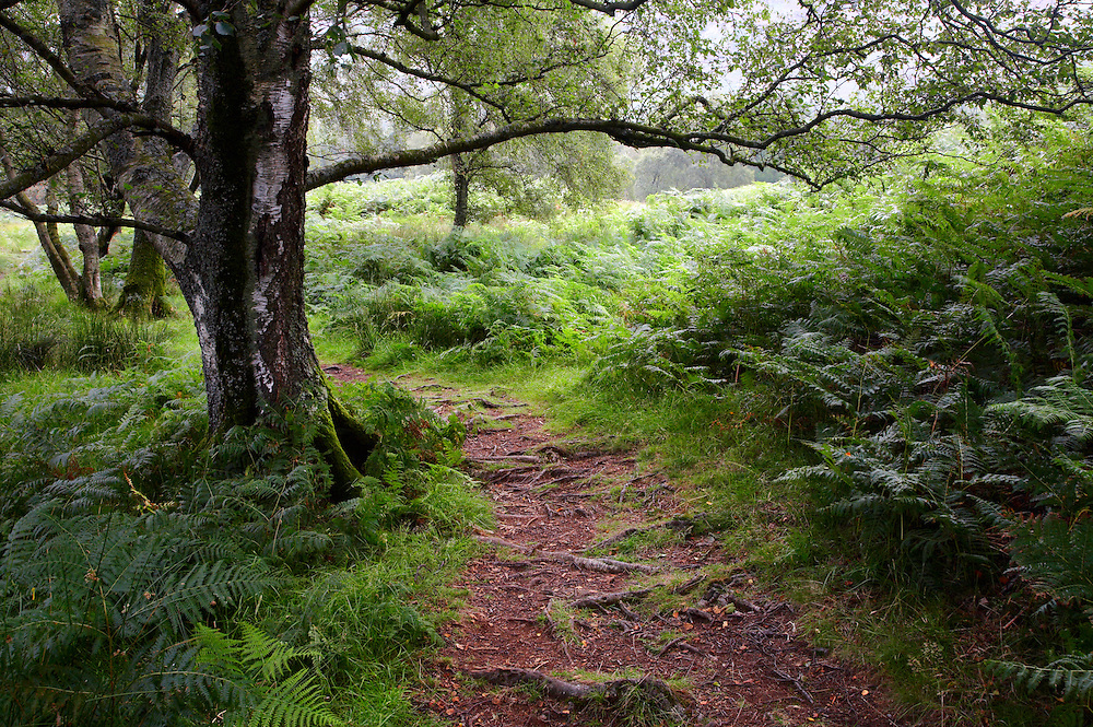 An abundance of lush green ferns guide you along a root littered woodland path around the delightful shores of Derwent Water.