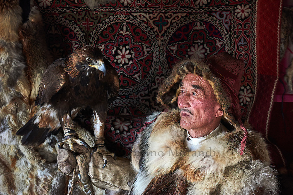 Mongolie, province de Bayan-Olgii, Ydyrysh, chasseur à l'aigle Kazakh avec son aigle royal // Mongolia, Bayan-Olgii province, Kazakh eagle hunter with his Golden Eagle