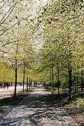 Pathway in the Tiergarten, the largest park in Berlin.