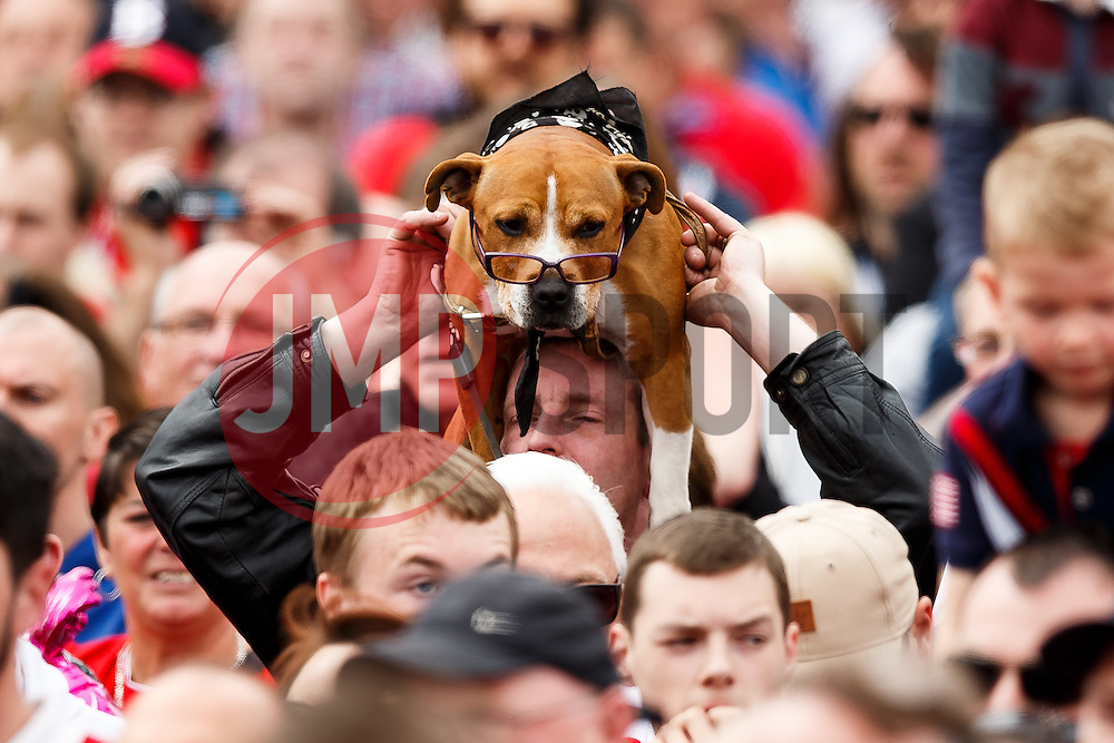 A spectacle wearing dog is held up by its owner as thousands of fans pack Lloyds Amphitheatre during the Bristol City open top bus parade to celebrate winning both the League 1 and Johnstone's Paint Trophy titles this season and promotion to the Championship - Photo mandatory by-line: Rogan Thomson/JMP - 07966 386802 - 04/05/2015 - SPORT - FOOTBALL - Bristol, England - Bristol City Bus Parade.