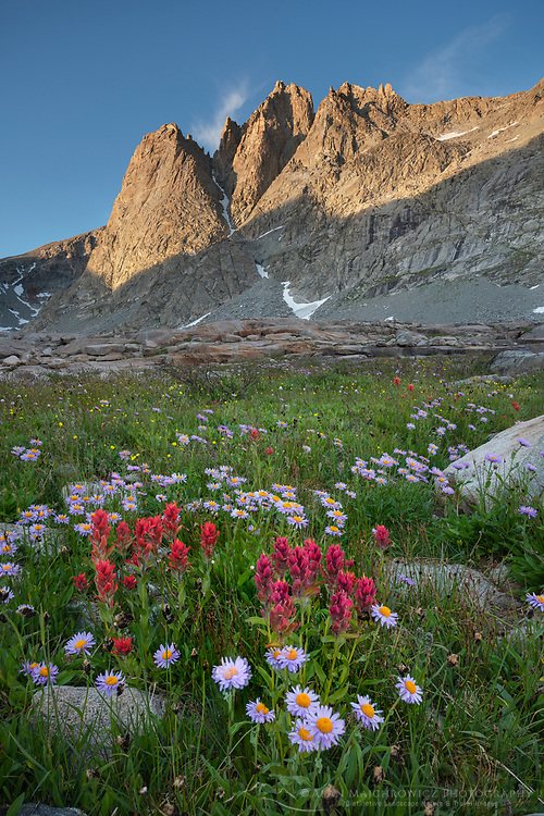 Mount Helen amd field of Red Paintbrush Asters growing in Upper Titcomb Basin, Bridger Wilderness, Wind River Range Wyoming