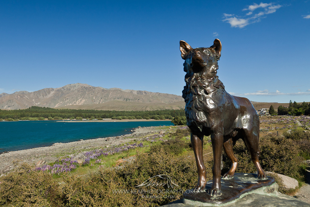 Sheepdog statue, at Church of the Good Shepherd, New Zealand
