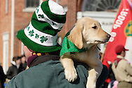 Goshen, New York -  A man wearing a hat decorated with shamrocks holds his dog on this shoulder while watching the Mid-Hudson St. Patrick's Day parade on March 11, 2007.