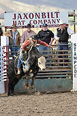 Rodeo: Bull Riding