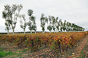 rural countryside with vineyard and trees France Languedoc Aude