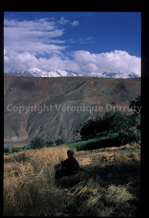 La récolte. Paysan dans son champ, Upper Chitral, Nord Pakistan