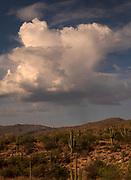 A monsoon thunderhead cloud drops rain in the distance, Sonoran Desert, Saguaro National Park, Rincon District, Tucson, Arizona, USA.