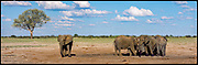 Watering Hole, Elephants, Detema, Zimbabwe, 1995