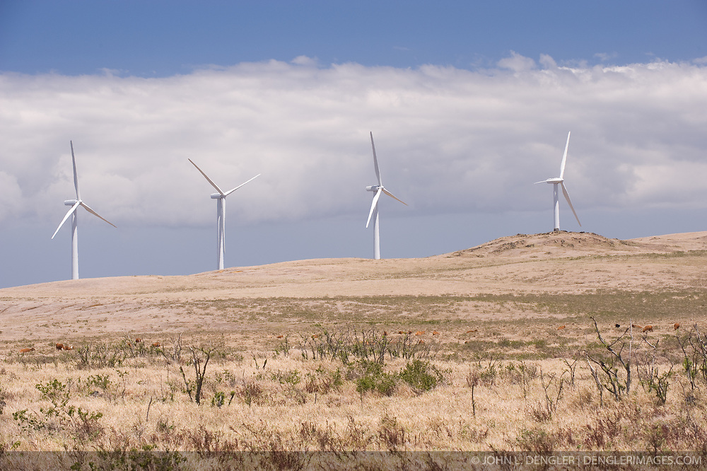 Cattle graze near the Pakini Nui Wind Farm at Ka Lae on the Big Island of Hawaii. The area is known for strong winds and has been the site of several wind farms. The Pakini Nui Wind Farm replaced the nearby Kamaoa Wind Farm in 2007 after the Kamaoa project fell into disrepair and was closed in 2006. The Pakini Nui project consists of 14 General Electric 1.5 MW wind turbines . The wind turbines add 21 megawatts of capacity to the Big Island -- enough power for more than 10,000 homes. Each blade of the pictured turbines is 100 feet long. Ka Lae also known as South Point, is the most southernmost point of the 50 United States.