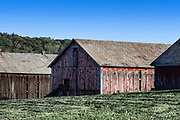 Tobacco curing barns, Massachusetts, USA.
