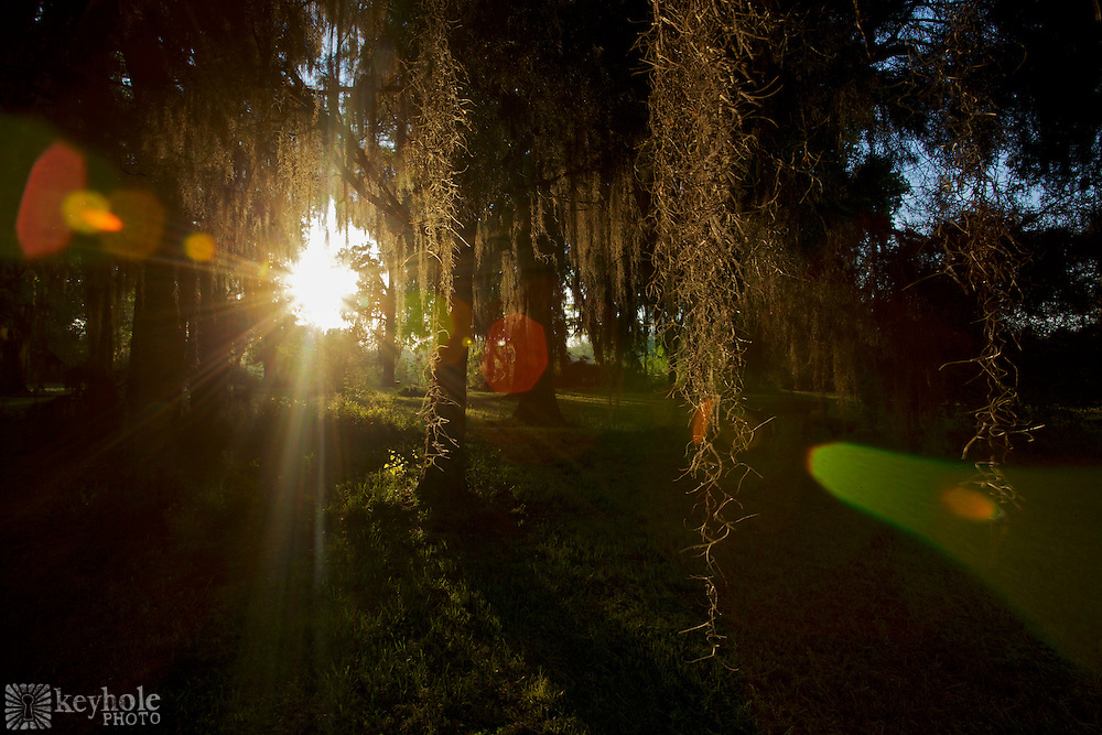 "Spanish Moss hangs from trees in a field where ""Castle Morgan"" once stood in Old Cahawba Archaeological Park in Alabama. During the Civil War, the building served as a prison for 3,000 captured Union troops."