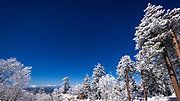 Snow dusted pines in the San Bernardino Mountains above Lake Arrowhead, San Bernardino National Forest, California USA