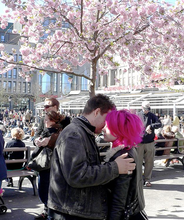 Kärlek under blommande körsbärsträd i Kungsan 2007