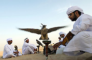 Young men rendezvous in the desert to train their falcons to hunt, whilst chatting and drinking Arabic Coffee.Abu Dhabi, UAE