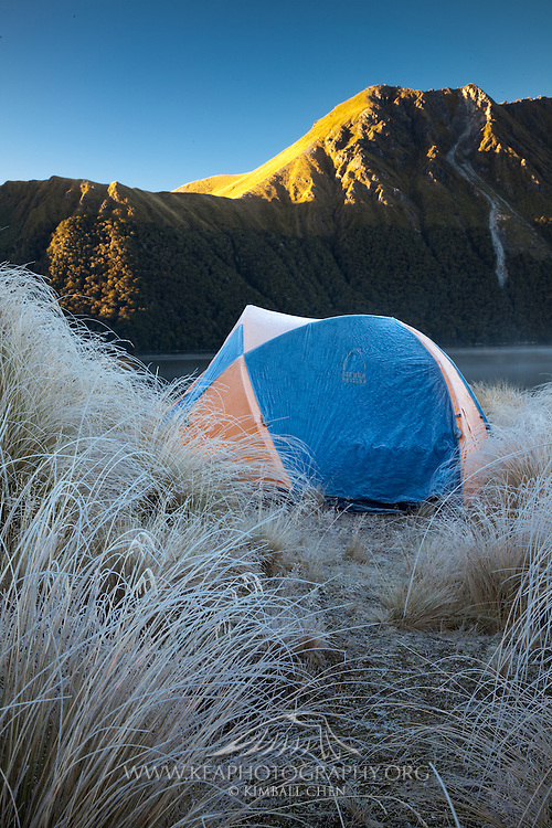 Hoar frost on the tussocks and the golden rays of sunrise on the mountain across Green Lake, Fiordland.