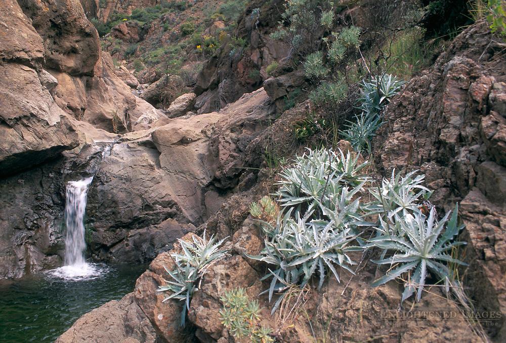 Waterfall cascade in canyon, Santa Cruz Island, Channel Islands, California