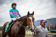 ARCADIA, CA - JANUARY 07: Gormley #5, ridden by Victor Espinoza, wins the Sham Stakes at Santa Anita Park on January 7, 2017 in Arcadia, California. (Photo by Alex Evers/Eclipse Sportswire/Getty Images)