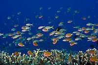 Marine life and Hawaiiana in Kona and the Hawaiian Islands.