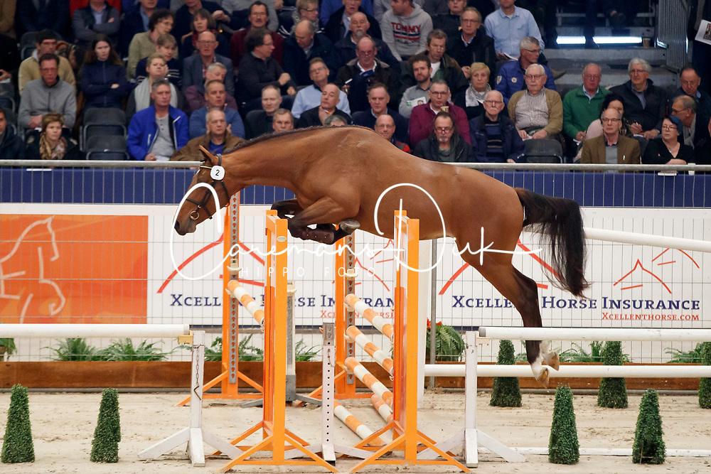 002, King of Action RV<br /> KWPN Stallionshow - 's Hertogenbosch 2018<br /> © Hippo Foto - Dirk Caremans<br /> 31/01/2018