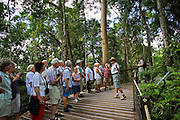 Tourists on rainforest boardwalk in Barron Gorge National Park, North Queensland, Australia