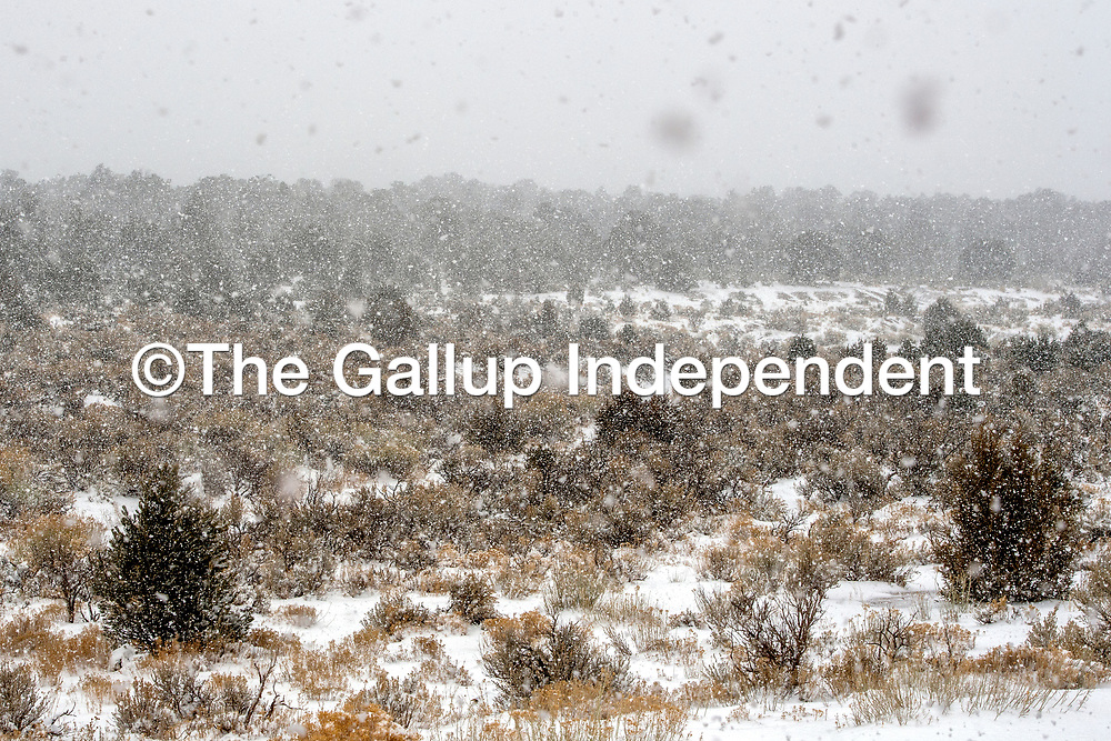 Heavy snow falls in the Zuni Mountains near Bread Springs Sunday.