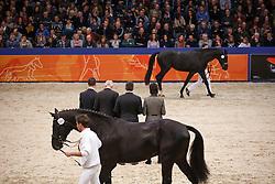499 - Go On Top MP<br /> KWPN Stallion Selection - 's Hertogenbosch 2014<br /> © Dirk Caremans