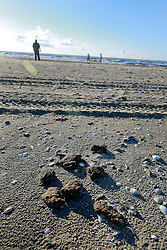 12th October, 2013. Wisner Beach, Port Fourchon, Louisiana.<br /> Following recent storms in the Gulf of Mexico, tar balls, oil particles and and vast oil mats from the BP Deepwater Horizon Macondo Well continue to wash ashore in abundance. 3 1/2 years since the worst oil spill in history and on the eve of a potentially historic penalties which could be as high as $18 billion being levied against British Petroleum by the Federal Government, it is clear that BP's problems will not go away any time soon.