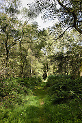 Woodland path in Bruern Wood nature reserve in The Cotswolds, Oxfordshire, England, UK