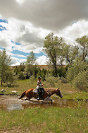 Competitive Trail Ride, Mantle Ranch, Three Forks, Montana, MODEL RELEASED, PROPERTY RELEASED