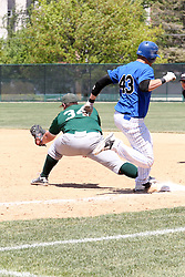 11 May 2013:  Kevin Callahan scoops up the throw out on Lou Diaz during an NCAA division 3 College Conference of Illinois and Wisconsin (CCIW) Pay in Baseball game during the Conference Championship series between the North Park Vikings and the Illinois Wesleyan Titans at Jack Horenberger Stadium, Bloomington IL