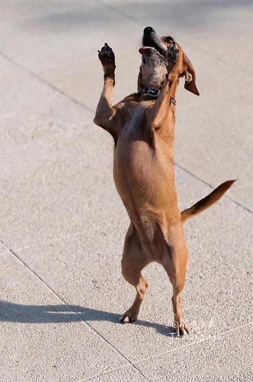 Balancing Dog, San Jose del Cabo, Baja California Sur, Mexico