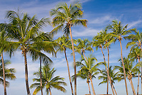 Palm trees of this Caribbean beach (Copamarina Resort)