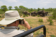 A man photographs a group of elephants from a safari vehicle in the Ngala Private Game Reserve, Kruger National Park, South Africa. http://www.gettyimages.com/detail/photo/photographing-elephants-on-safari-royalty-free-image/93425715