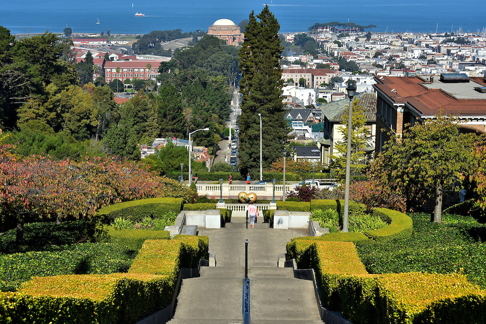 Lyon Street Steps View in San Francisco, California<br /> If you are an athlete, you will love the challenge of running up and down the 288 steps at the intersection of Broadway and Lyon Streets.  For everyone else, you will love this spectacular view of the manicured hedges leading into the Cow Hollow neighborhood, beyond the Palace of Fine Arts and into San Francisco Bay.