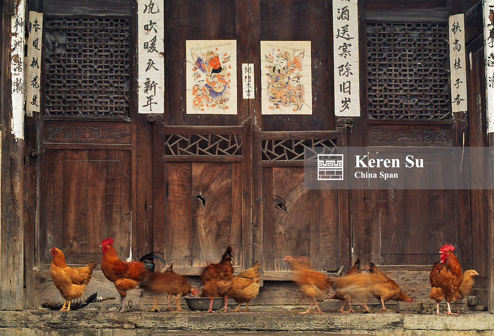 Buyi people's wood door decorated with posters and courtyard with chicken, Guizhou, China