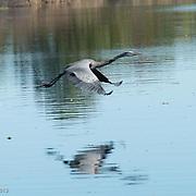Santee Costal Reserve, South Carolina