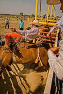 Bareback Riding, Crow Fair Rodeo, Crow Indian Reservation, Montana, Goldman Real Bird, winner of Bareback