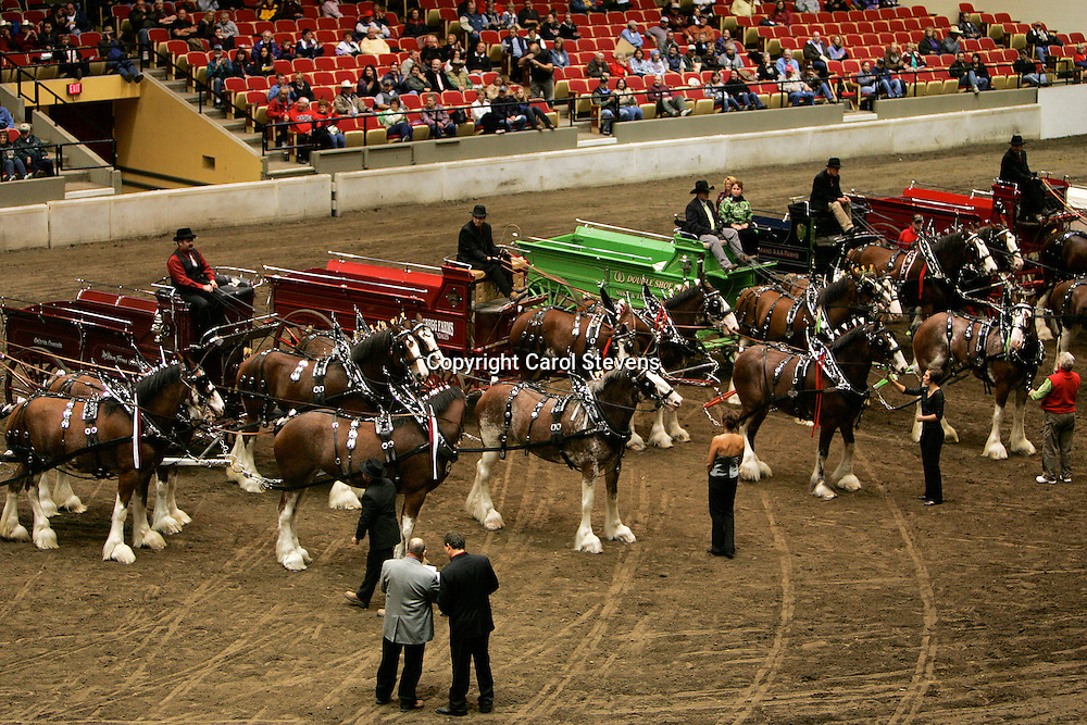 World Clydesdale Show 2011  Teams