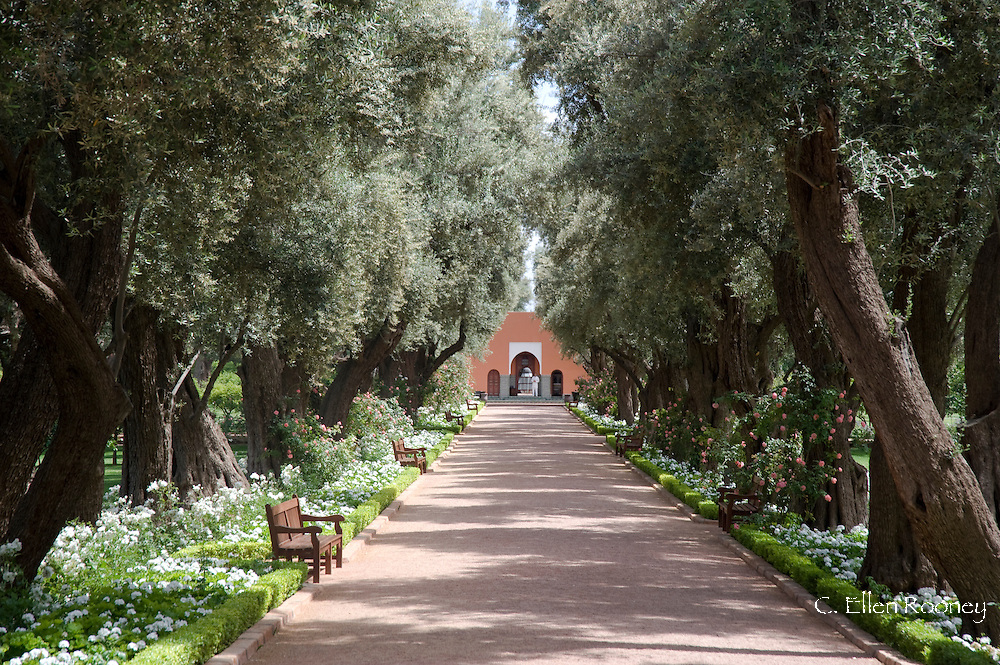 A path surrounded by roses and olive trees leading to a pavilion in the garden at La Mamounia Hotel in Marrakech, Morocco