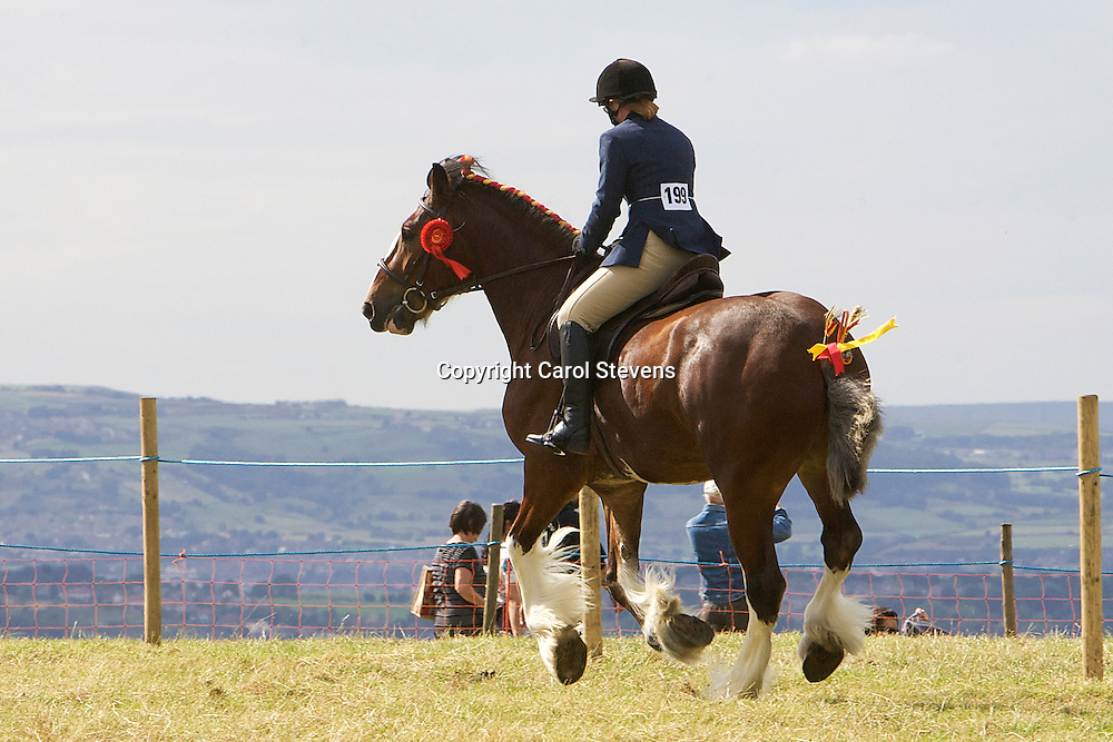 Emley Show 2012  Shire Classes