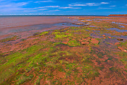 Red sandstone beach and algae at low tide<br />West Cape<br />Prince Edward Island<br />Canada