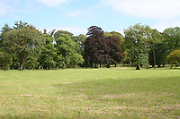 Trees in he grounds of Birr Castle Demesne in County Offaly Ireland