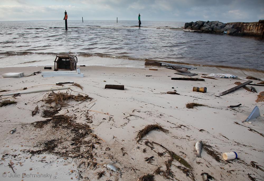 Fishkill on Mexico Beach, Florida following Hurricane Michael.