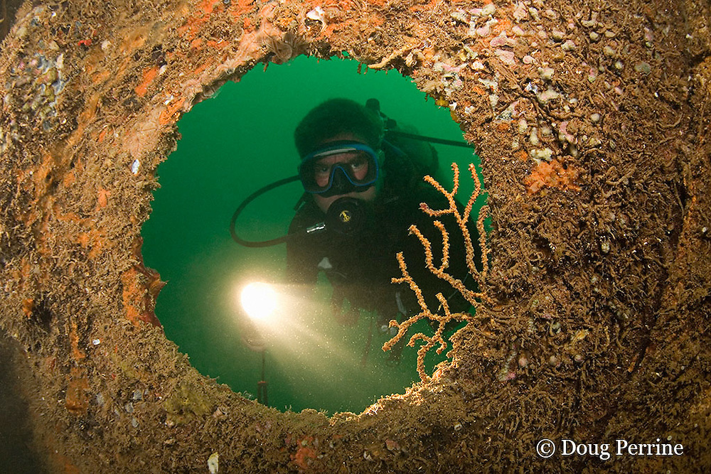 diver peers through porthole on the wreck of the Oryoku Maru, a Japanese Hell Ship, originally a luxury cruise liner, converted for military use; when sunk by Allied air strike on Dec. 15, 1944 it was being used to transport military cargo, Japanese families, and Allied prisoners to Japan; the wreck is at a depth of 15-20 m near Alava Pier in Subic Bay, Philippines, MR 378