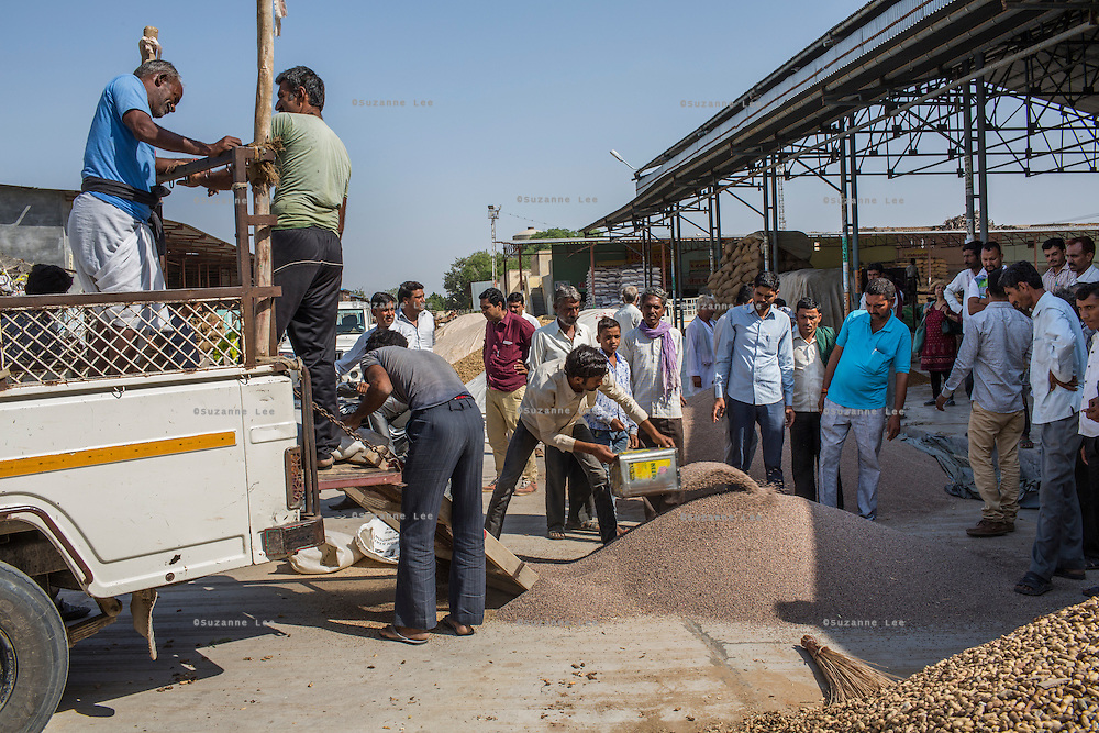 Traders bid for guar harvests from piles as farmers bring in their harvests to be auctioned off in Bikaner, Rajasthan, India on October 24th, 2016. Non-profit organisation Technoserve works with farmers in Bikaner, providing technical support and training, causing increased yield from implementation of good agricultural practices as well as a switch to using better grains better suited to the given climate. Photograph by Suzanne Lee for Technoserve