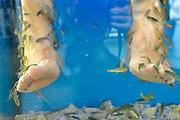 Nederland, Scheveningen, 16-9-2012Voeten in een aquarium met sabbelende en knabbelende Garra Rufa visjes die masseren en schilfers van de huid wegeten.. Foto: Flip Franssen